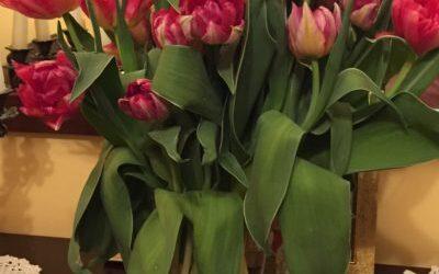 Kwiatowa niespodzianka